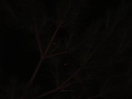 Rurikakesu080824