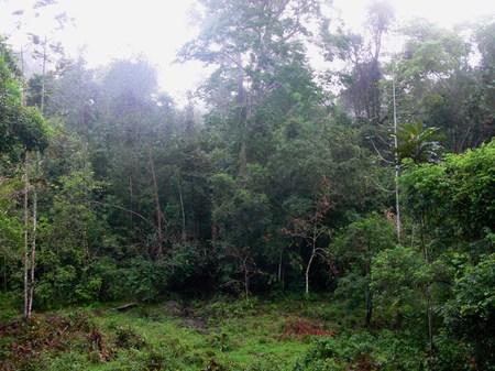 Jungle090316