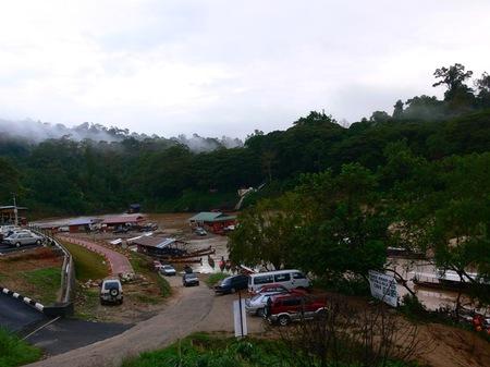 Jungle090305
