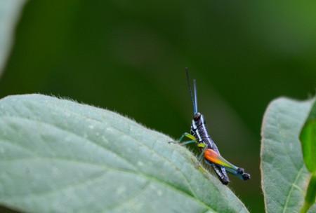 Sulawesi865